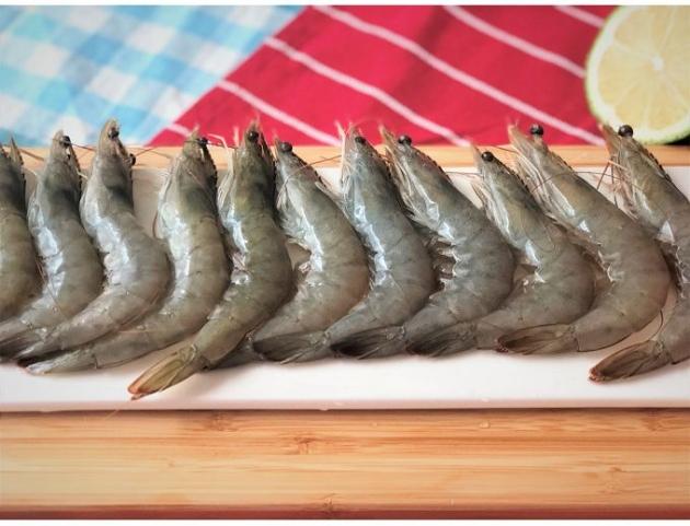 阿拉伯頂級藍鑽蝦 3